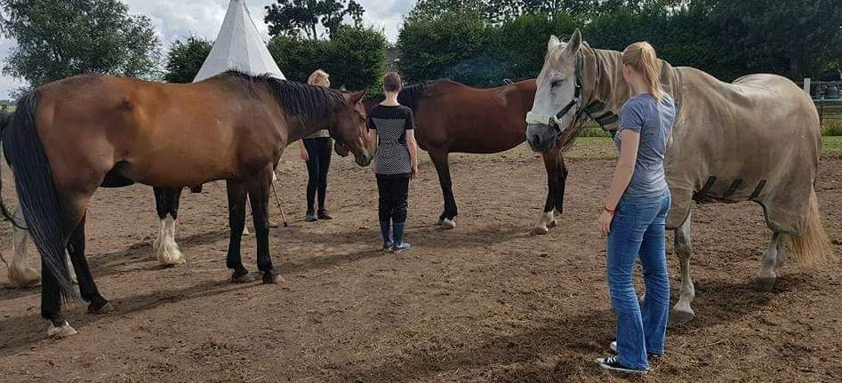 Familieopstellingen met paarden